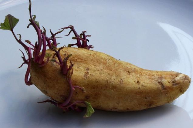 potato-1927136_640