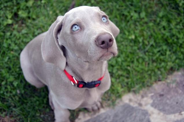 dog-613926_640