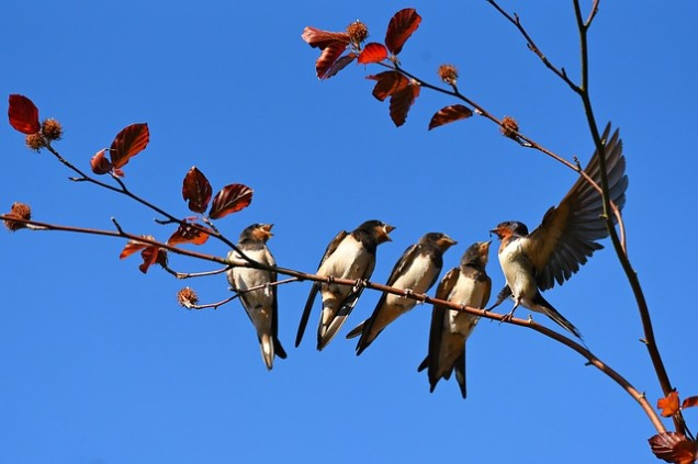 swallow-3584915_640